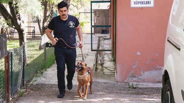 Dedektör köpekler hayat kurtarıyor