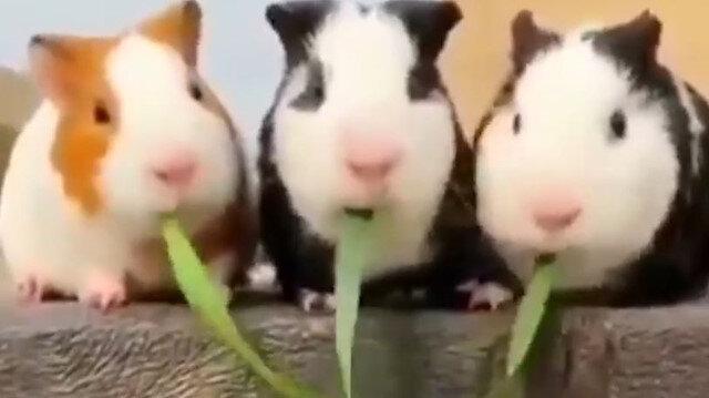 Sevimli tavşanlardan yemek şovu