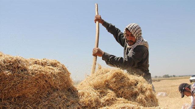 Saman işçileri