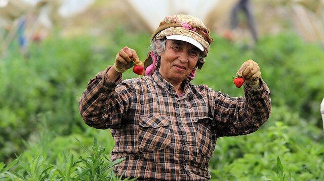 تركيا.. أنامل نساء آيدن تنشط في حصاد الفراولة