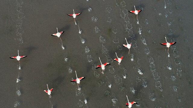 """بحيرة """"توز"""" التركية.. أكبر مستعمرة لطيور الفلامينغو المهاجرة"""
