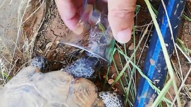 Sıcaktan bunalan kaplumbağaya bardaktan su içirdi