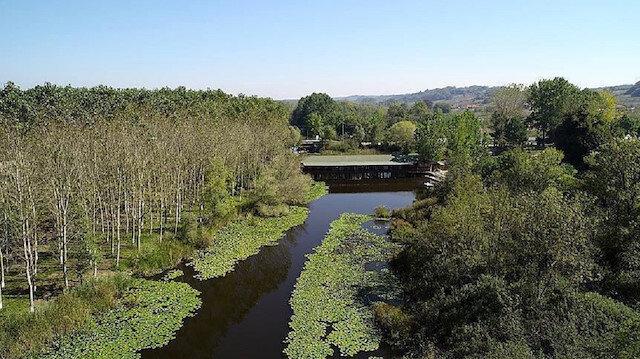 """غابات الـ""""لونغوز"""" التركية تثير إعجاب زوارها بجمالها الساحر"""