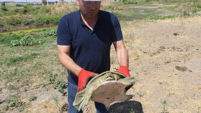 Kaplumbağa doğal yaşam alanı olan Dicle Nehri'ne geri bırakıldı.