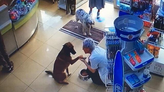 Patisinden yaralanan köpeğin eczacıdan yardım istediği anlar