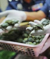 Havalimanında5 bin kaplumbağa