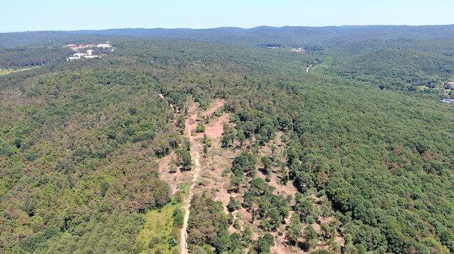 Ağaçların katliamı yapıldığı iddia edilen alan.