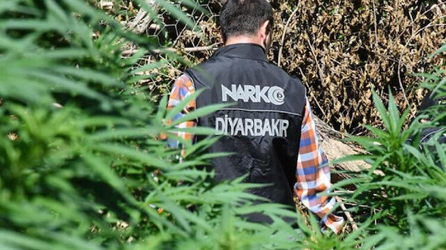 Diyarbakır'da 1 milyon kök Hint keneviri ele geçirildi