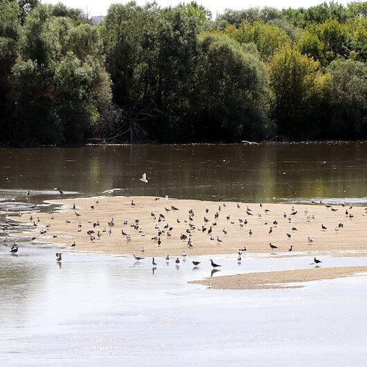 الطيور ترتاد جزرًا رملية في نهر طونجه التركي