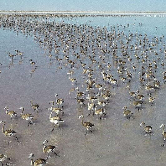 Turkey's Salt Lake welcomes thousands of flamingo chicks
