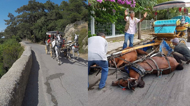 Adalar'da faytona koşulan atlar