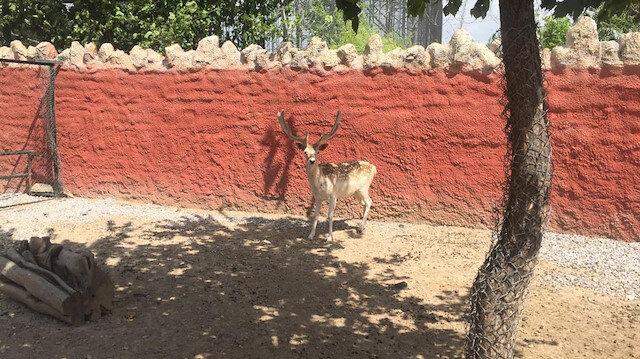 يعالج حتى المفترسة منها.. مشفى خاص للحيوانات البرية بقونيا التركية