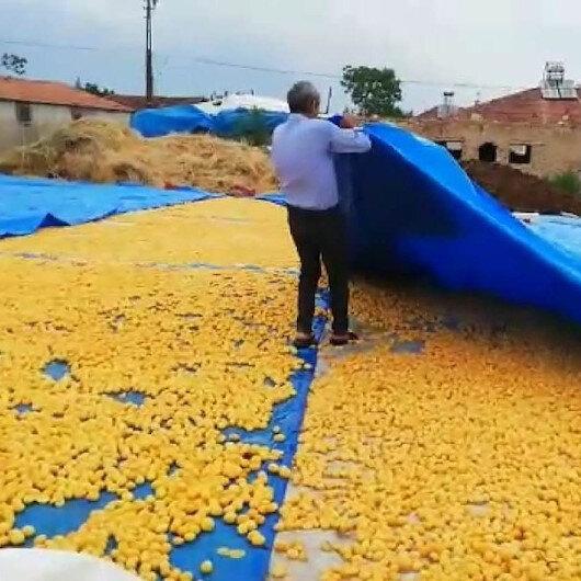 Malatya'da sağanak yağış kayısı üreticilerini vurdu