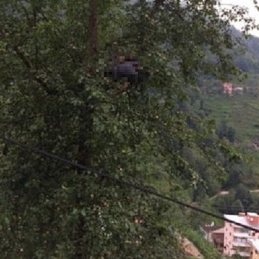 Armut toplamaya çıktığı ağaçta korkunç ölüm