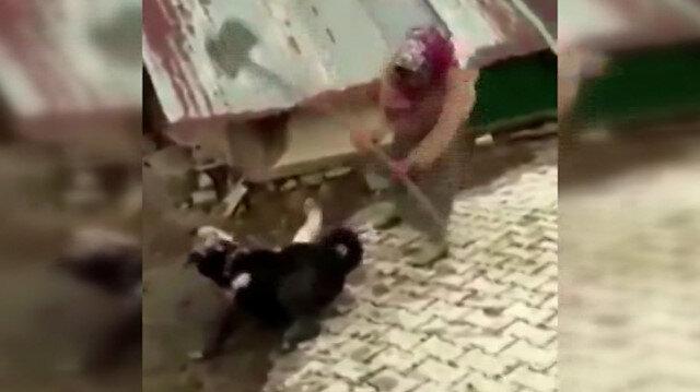 Köpekleri ayırmak için kürekle vuran kadına sosyal medyada tepki yağdı