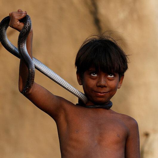 'Definitely weird': Indian man bites snake