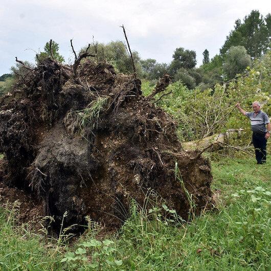 Kırklareli'de hortum ağaçları kökünden söktü
