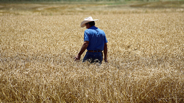 FILE PHOTO: Farmer Kenton Gossen looks out over his wheat field during the wheat harvest in Corn, Oklahoma, U.S., June 12, 2019. REUTERS/Nick Oxford?/File Photo
