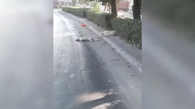 Sokak köpeğinden dostluk dersi