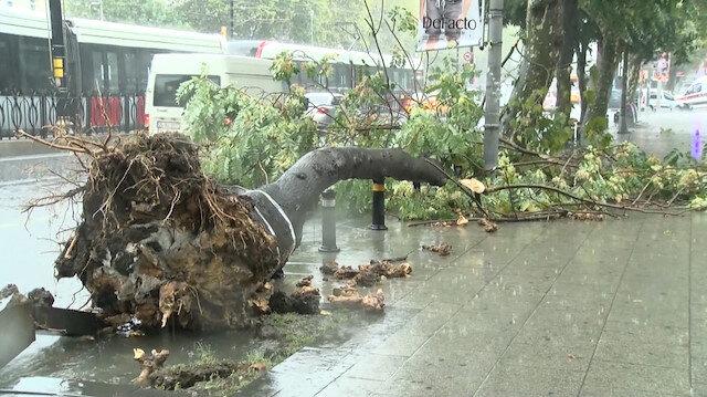 İstanbul'da sağanak yağış ağaçları devirdi