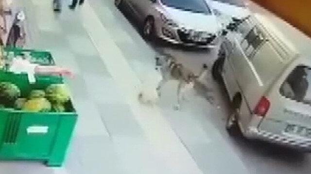 Süs köpeğiyle dalaşan sokak köpeğini tekmeledi