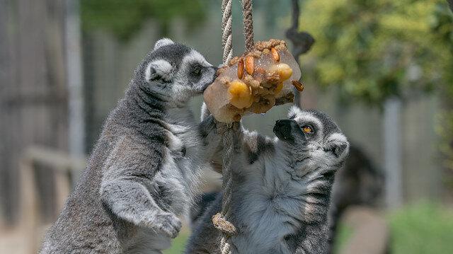 حيوانات حديقة إزمير التركية تتنعم بالأطعمة المثلجة