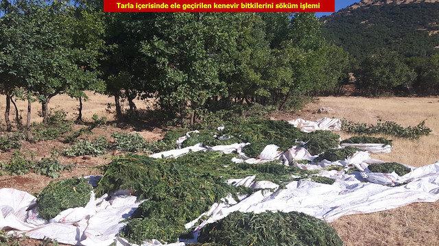 Diyarbakır'da ele geçirilen hint kenevirleri.