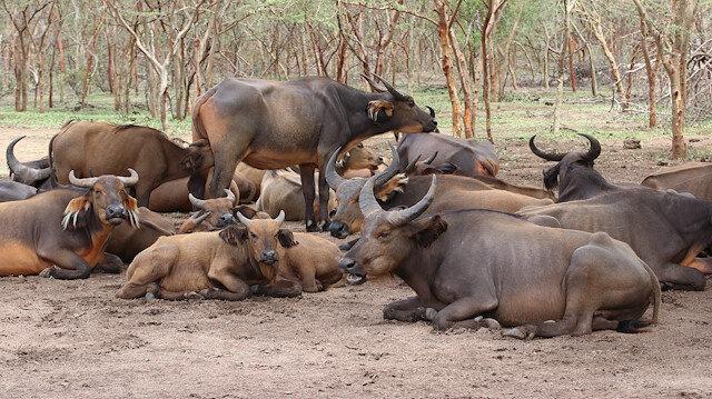 """حديقة """"بانديا ريزيرفي"""" السنغالية.. مثال حي للبراري الإفريقية"""