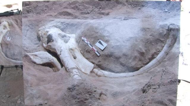 Kayseride bulunan 7 milyon 500 bin yıllık fosil dünyada tek