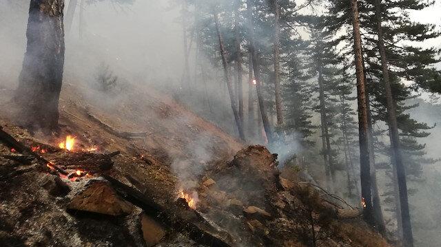 Afyonda orman yangını