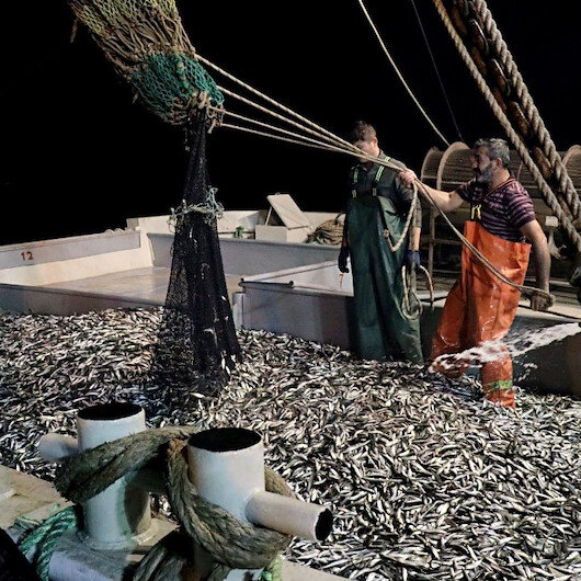 Samsunlu balıkçılar denizden 120 kasa istavritle döndü