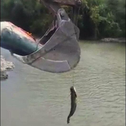 Tuttuğu balığı kepçe ile sudan çıkarttı
