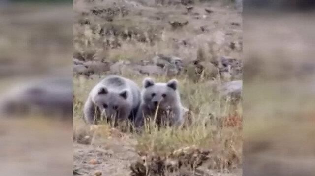 Vatandaşlar yavru ayıları elleriyle besliyor