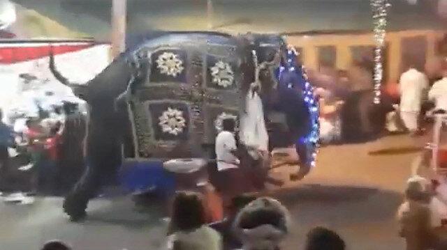 Srilankada filler kalabalığın arasına daldı: 17 yaralı