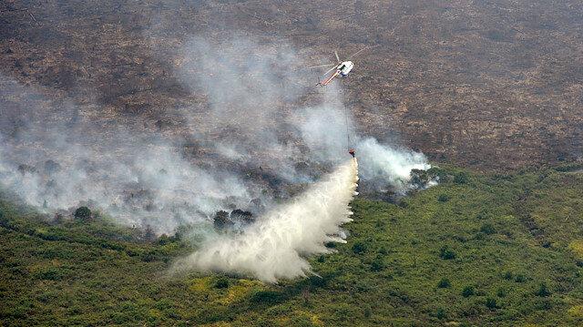 Endonezya'da 330 bin hektar orman kül oldu