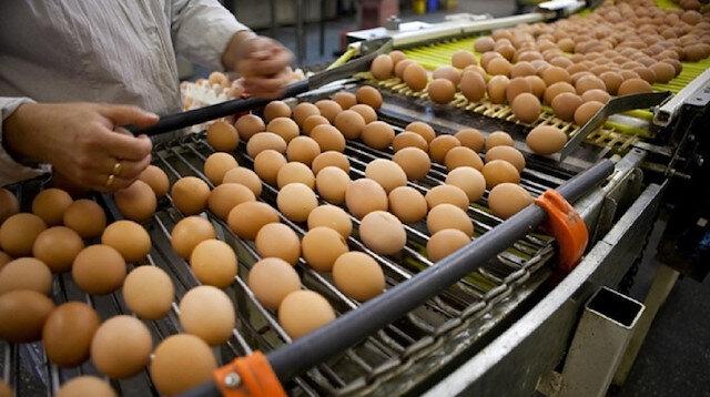 غرب تركيا يصدر 200 شاحنة بيض أسبوعيًّا للشرق الأوسط