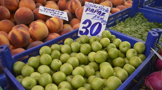 Erik hasat dönemi bitti, fiyatlar arttı.