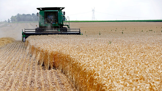 FILE PHOTO: A combine drives over stalks of soft red winter wheat during the harvest on a farm in Dixon, Illinoi