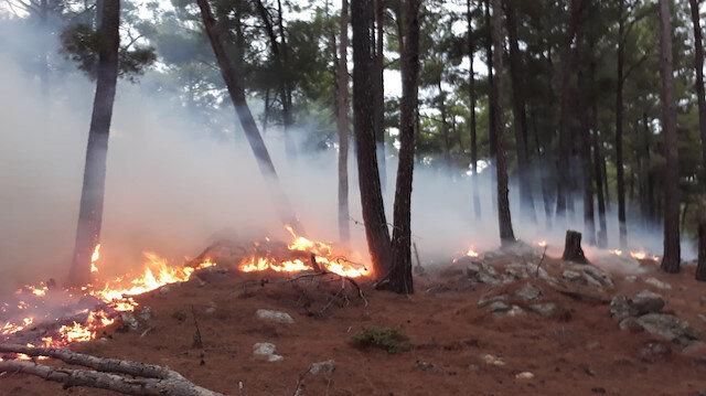Antalya ve Denizli'de orman yangını
