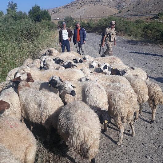 Kayıp koyunlar drone yardımıyla buldu