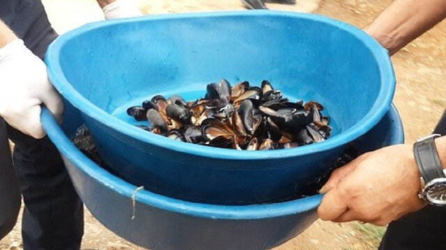 Antalya'da sağlıksız koşullarda üretilen 1,5 ton midye dolma ele geçirildi
