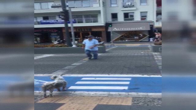 Yaya geçidindeki köpek insanlara ders verdi