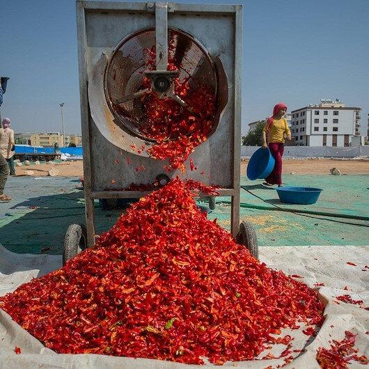 تركيا تصدر مسحوق الفلفل الحار إلى 91 دولة