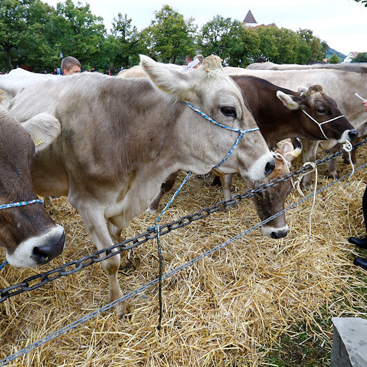 Turkey's dairy production down in August