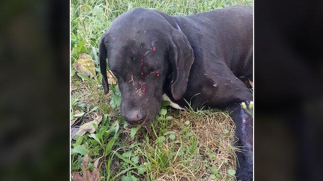 Bahçesine girdi diye komşunun köpeğini vurdu