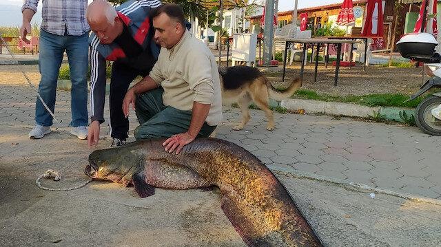 İznik'te balıkçının ağına 80 kiloluk yayın balığı takıldı: 4 bin liraya satın alındı