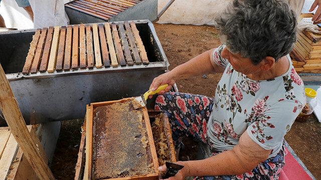 Turkish 'Queen of beekeepers' on hunt for best honey