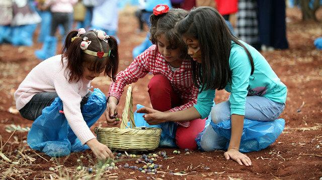 Hatay Reyhanlı'da Suriyeli yetimlerin zeytin hasat şöleni
