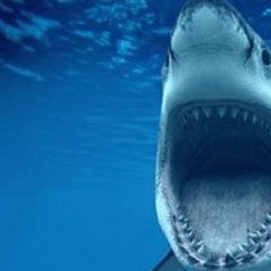 Swedes use ropes, towels to save Briton who lost foot to shark in Australia