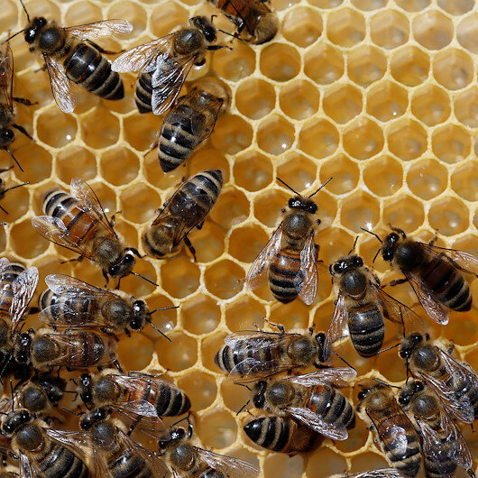 International organizations back Turkish pine honey